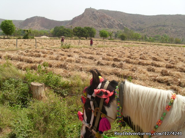 Ride in the Field - Royal Horse Safari in India