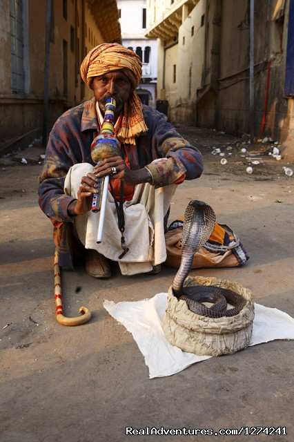 Chance to Meet & Photography of Snake Charmer - Royal Horse Safari in India