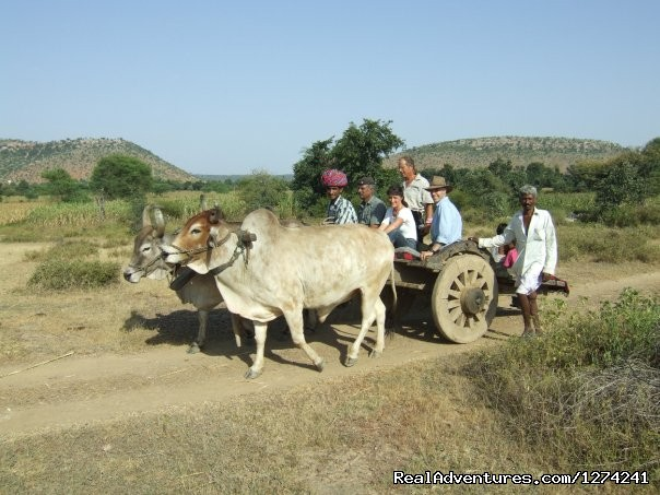 Will take you to the Historical Era - Royal Horse Safari in India
