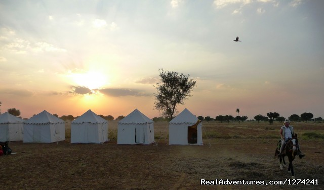 Nicely Located Camp - Royal Horse Safari in India
