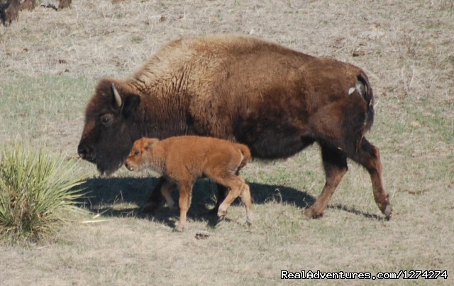 - Western Experience at Cedar Breaks Ranch