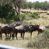 6 Days Serengeti Wildebeest Migration
