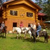 HorsebackRiding in the Nature and more ...