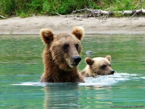 6 Hour Bear Tour Fishing Trips Soldotna, Alaska