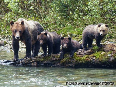 Mom and the Cubs at Wolverine Creek - 6 Hour Bear Tour