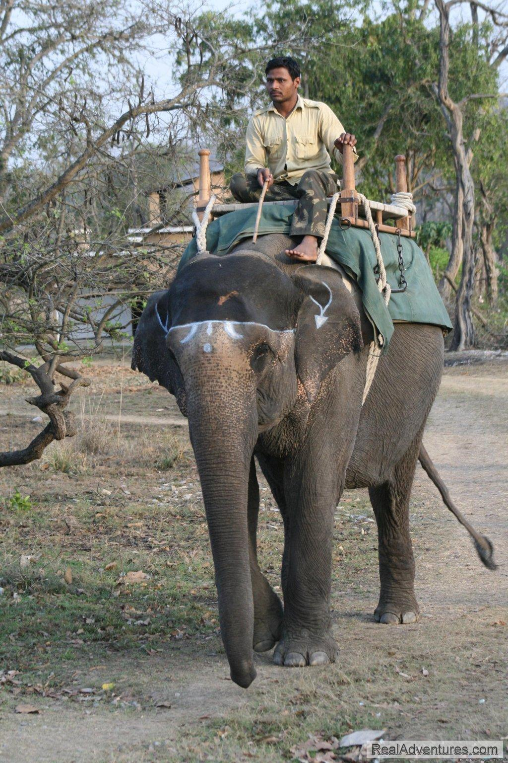 Elephant Backed Safari in Corbett | Image #1/26 | Ramnagar, India | Wildlife & Safari Tours | Corbett National Park