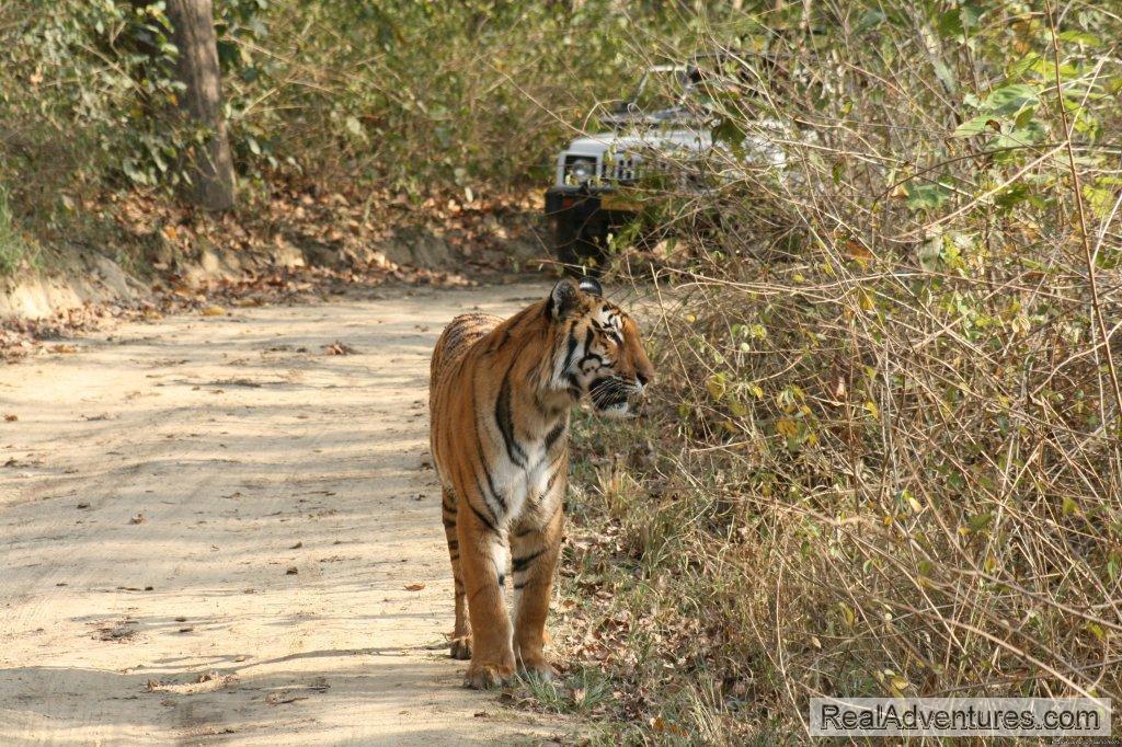 Tiger Tiger | Image #2/26 | Corbett National Park