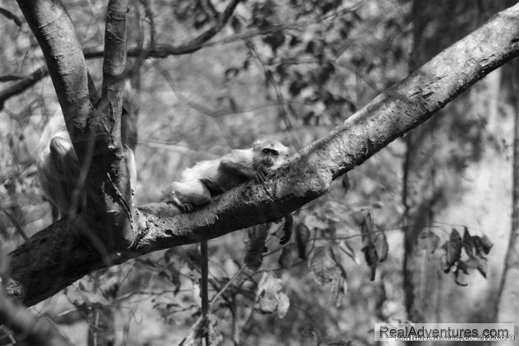 Image #4/26 | Corbett National Park