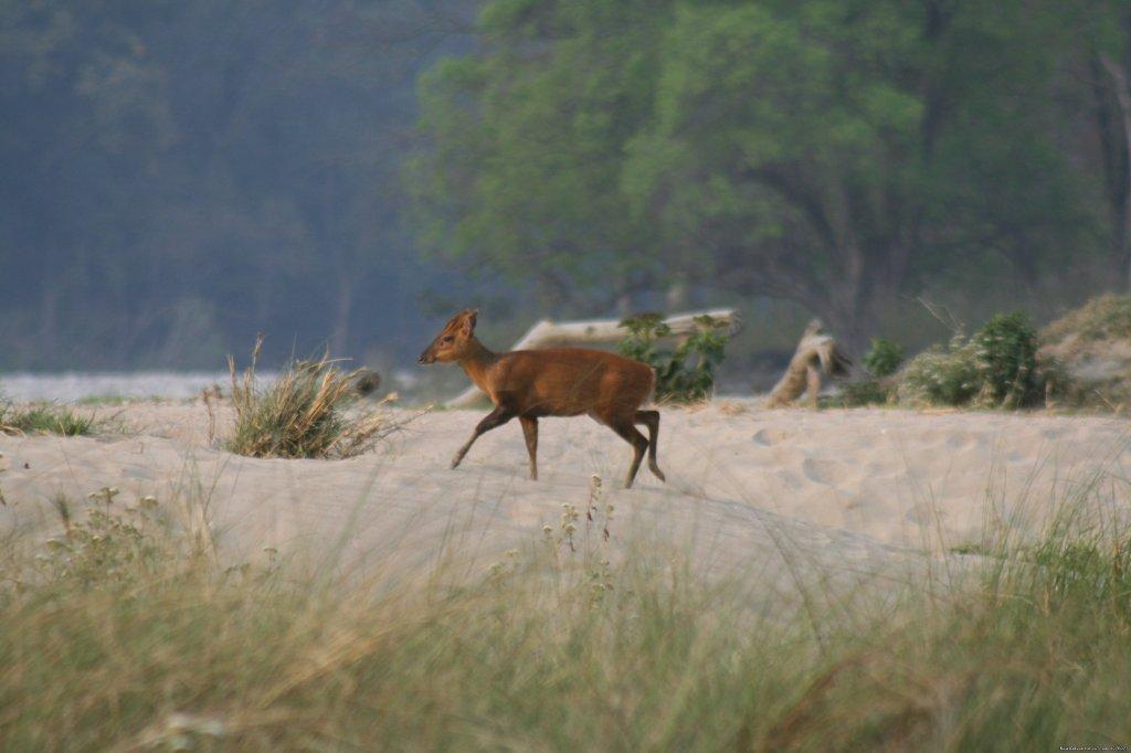 Image #12/26 | Corbett National Park