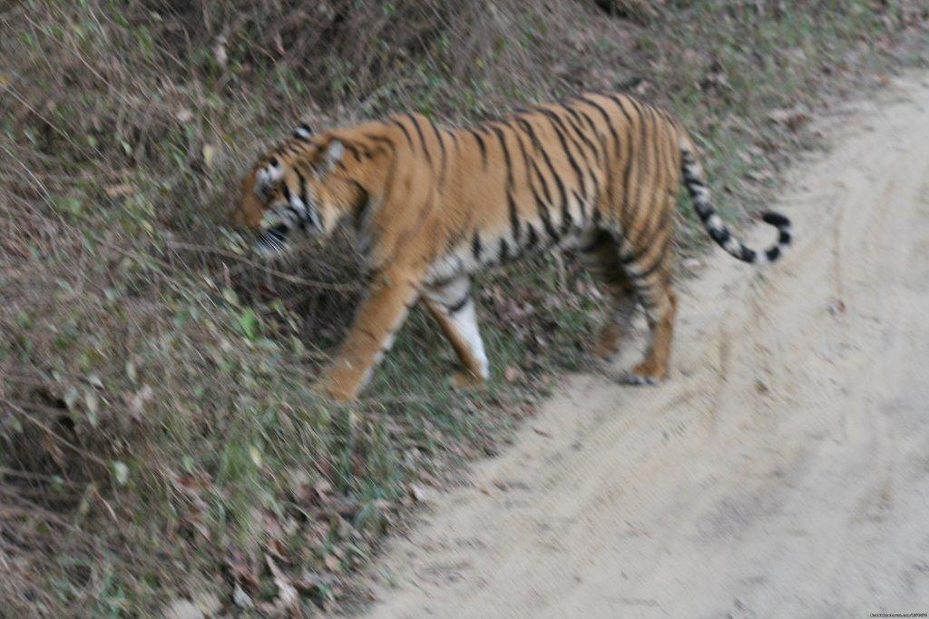 Image #13/26 | Corbett National Park
