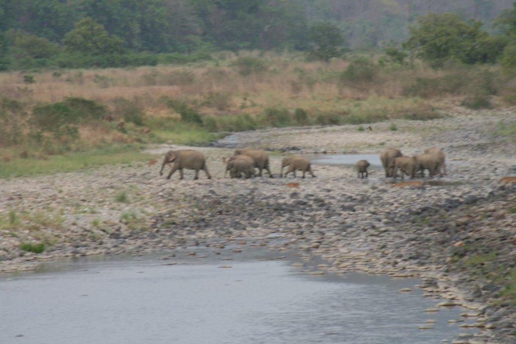 Image #16/26 | Corbett National Park