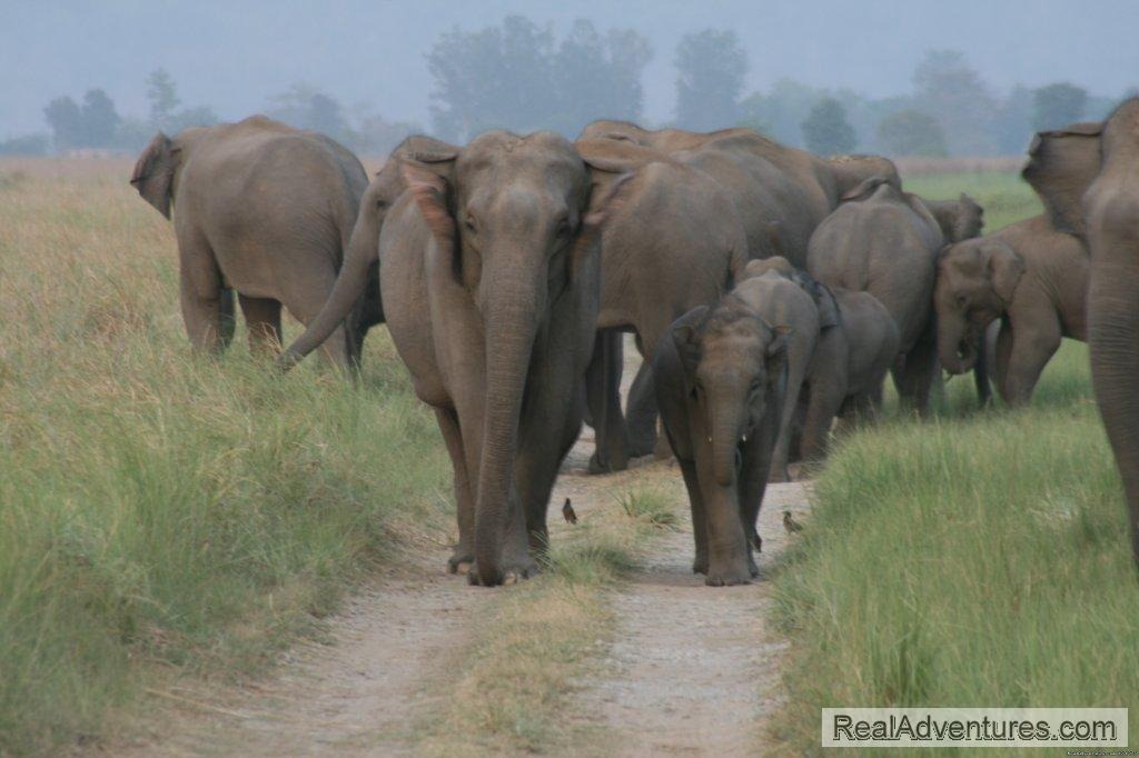 Image #19/26 | Corbett National Park