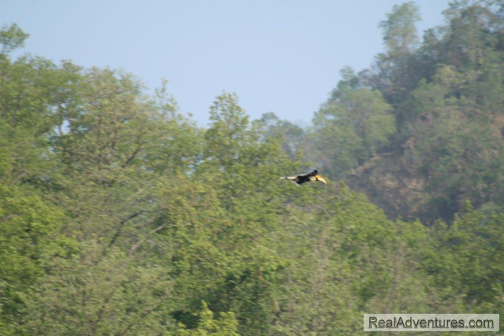 Image #20/26 | Corbett National Park