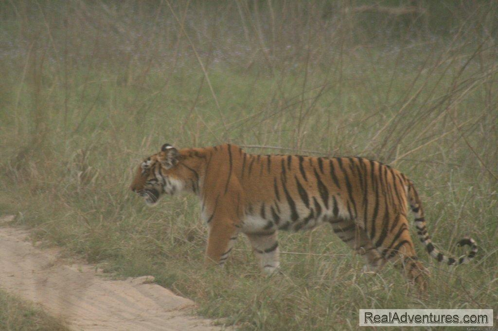Image #21/26 | Corbett National Park