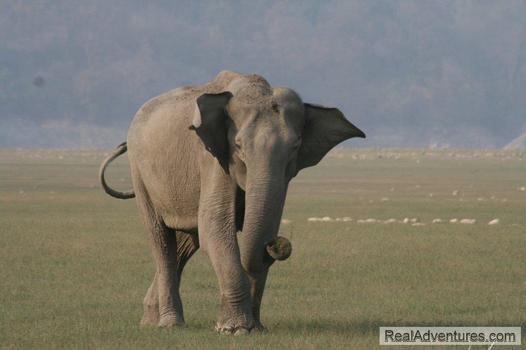Image #24/26 | Corbett National Park