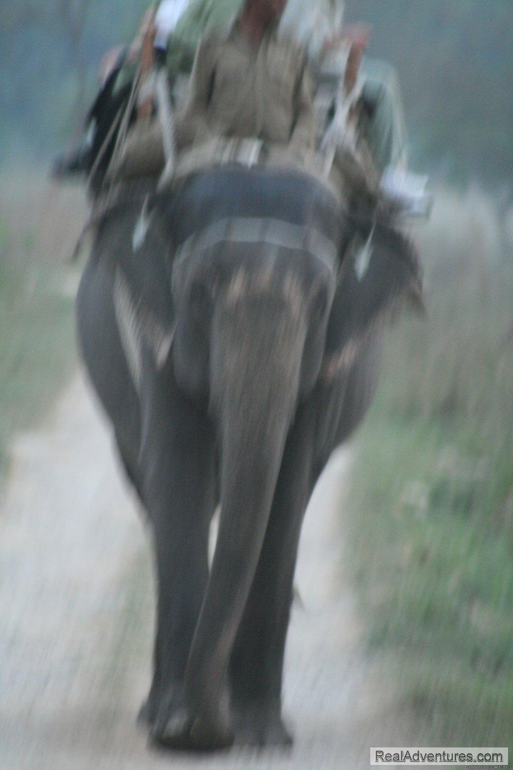 Image #25/26 | Corbett National Park