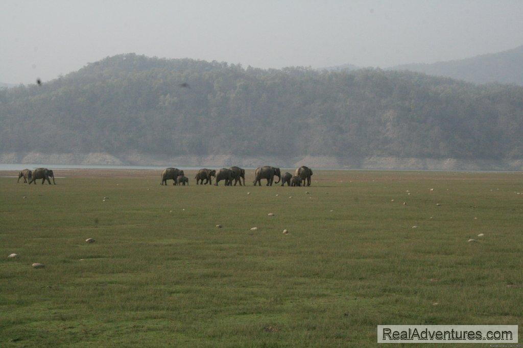 Image #26/26 | Corbett National Park