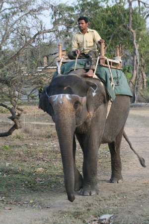 Corbett National Park Wildlife & Safari Tours Ramnagar, India