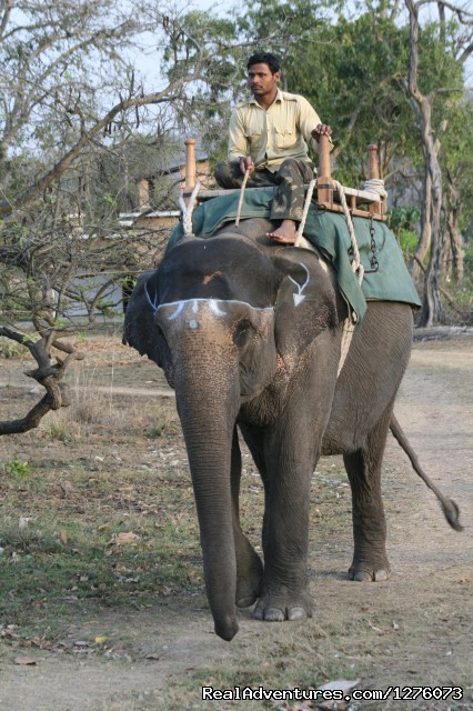 Elephant Backed Safari in Corbett - Corbett National Park