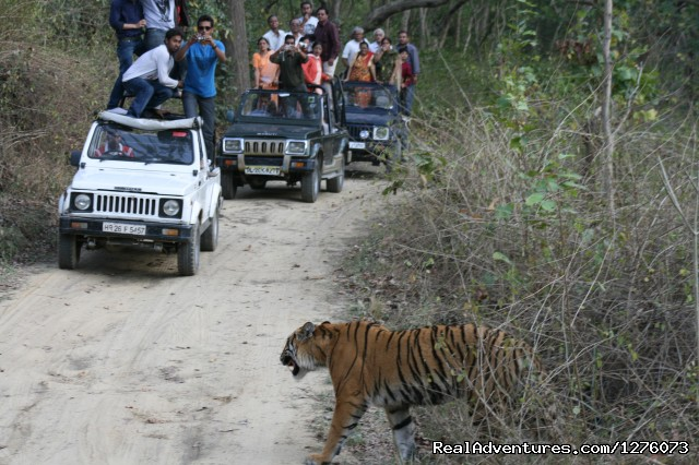 Jeep Safari in Corbett - Corbett National Park