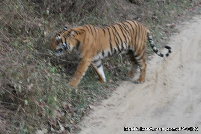 - Corbett National Park