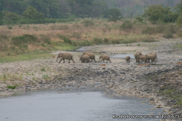 Image #16 of 26 - Corbett National Park