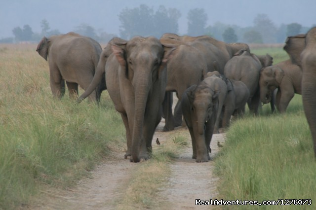 Image #19 of 26 - Corbett National Park