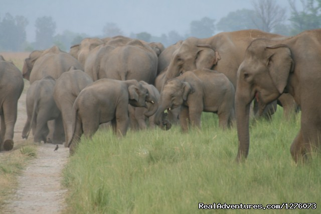 Image #22 of 26 - Corbett National Park