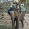 Corbett National Park Gurgaon, India Wildlife & Safari Tours