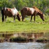 Hike and Explore Assateague Island Hiking & Trekking Savage, Maryland