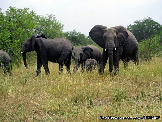 - The Great Serengeti Migration Trail 11 days