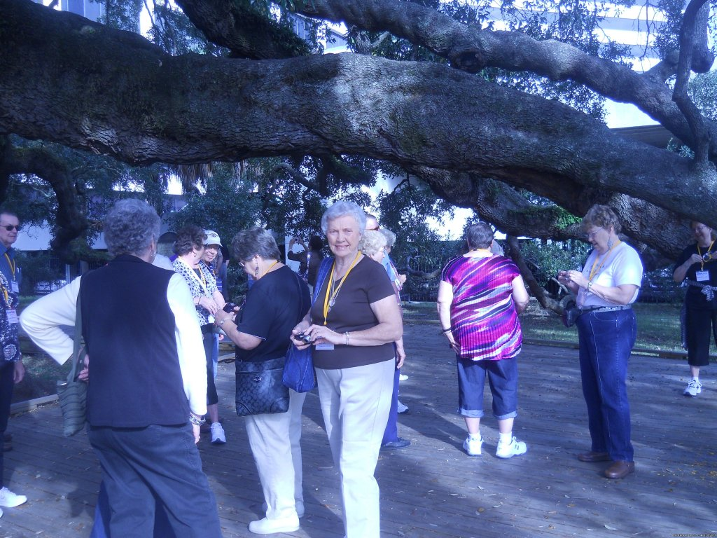 Treaty Oak ( 1000 year old Live Oak ) | Image #1/1 | Green Cove Springs, Florida  | Sight-Seeing Tours | Van and Motorcoach tours