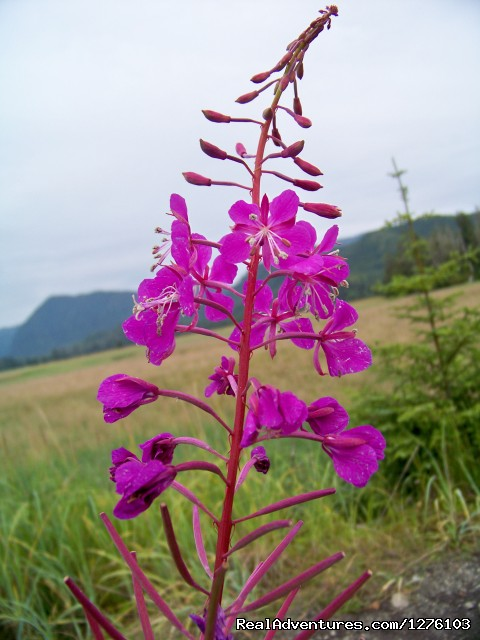 Fireweed - Outdoor Recreation Excursions from Sitka Alaska