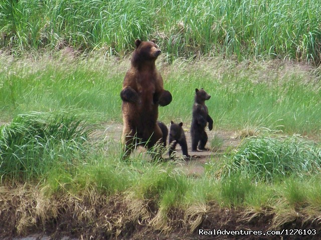 Momma and Cubs - Outdoor Recreation Excursions from Sitka Alaska