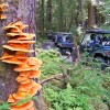 Outdoor Recreation Excursions from Sitka Alaska Sitka , Alaska ATV Trips