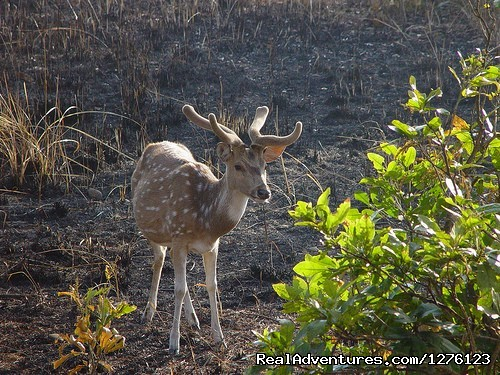 Image #2 of 8 - Jim Corbett National Park Tour