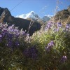 Santa Cruz Trekking - Cordillera Blanca Adventures