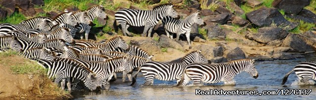 Kenya Safari Holidays |wildlife safaris to Kenya: