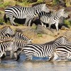 Kenya Safari Holidays |wildlife safaris to Kenya Sight-Seeing Tours Kenya