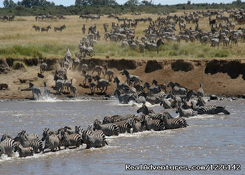 Maasai Mara Wildebeeste Migration - The Best  Africa Safaris at Africa Getaway Safaris
