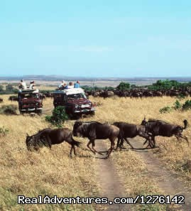 Image #9 of 15 - The Best  Africa Safaris at Africa Getaway Safaris