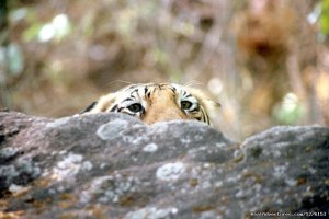 Sariska National Park Wildlife & Safari Tours Alwar, India