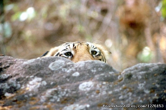 Hide and Seek - Sariska National Park