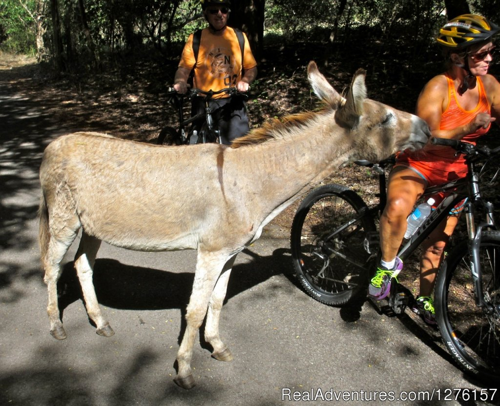 Image #10/12 | Nevis Bike Tours and Rentals