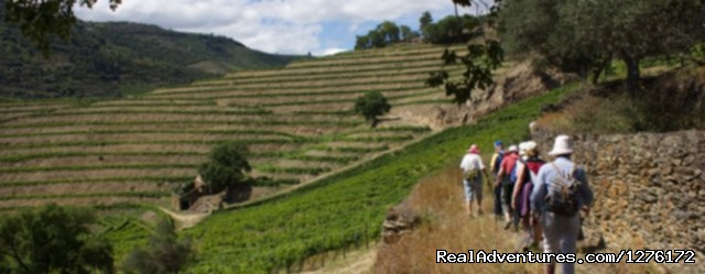Hikking in Douro - Douro Vineyards Hike 8D