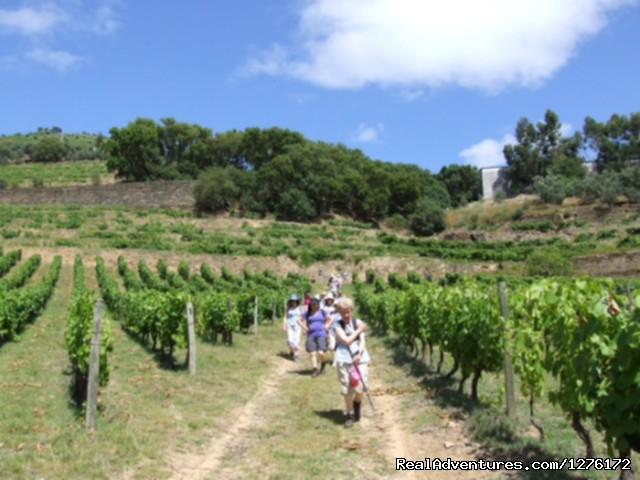 Group walking in Vineyards - Douro Heritage Hike