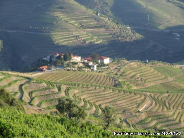 Landscape Douro - Douro Vineyards Hike 8D