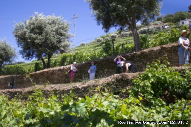 Hiking in Douro - Douro Heritage Hike