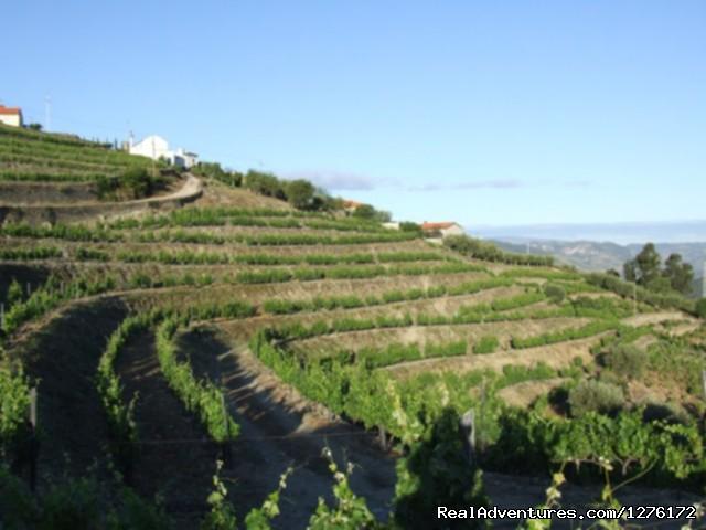 Image #13 of 26 - Douro Heritage Hike