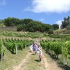 Group walking in Vineyards